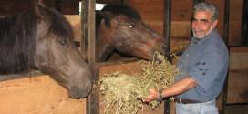 Ο ΛΕΥΚΟΡΙΤΗΣ ΣΤΟ ΟΡΟΠΕΔΙΟ ΑΣΚΥΦΟΥ : Μια πρότυπη αγροτουριστική μονάδα με άλογα