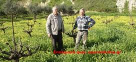 Μυστικά… για κλαδέματα και μπολιάσματα από έμπειρο αγρότη (Βίντεο και φωτογραφίες)