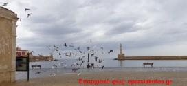 Ομορφιά ξεχωριστή με τα περιστέρια στο παλιό λιμάνι των Χανίων