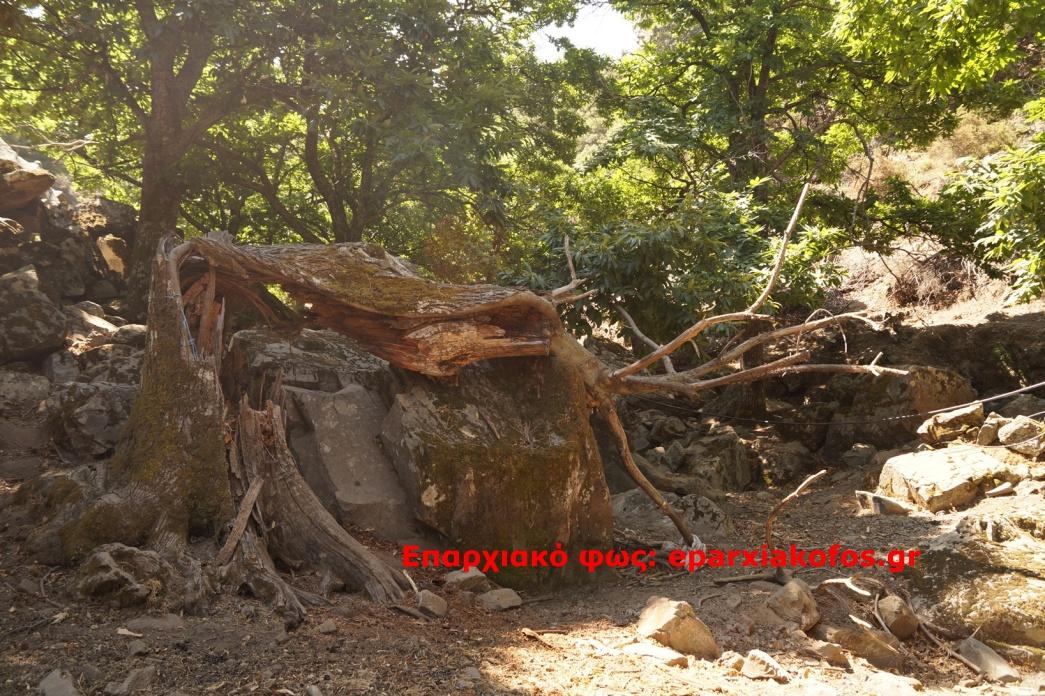 eparxiakofos.gr_image0085