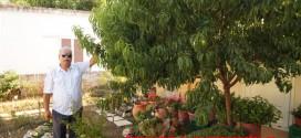 Ένα ασυνήθιστο δέντρο με την ονομασία Μηλοροδακινιά
