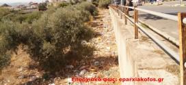 Τα σκουπίδια διάσπαρτα στα ελαιόδεντρα