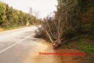 Έσπασε από τους ισχυρούς ανέμους το δέντρο στη νέα εθνική οδό