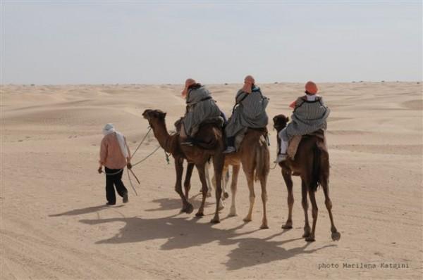 camels-600x398