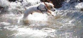 Ο μικρός Μπλέκ βουτά στα κύματα!
