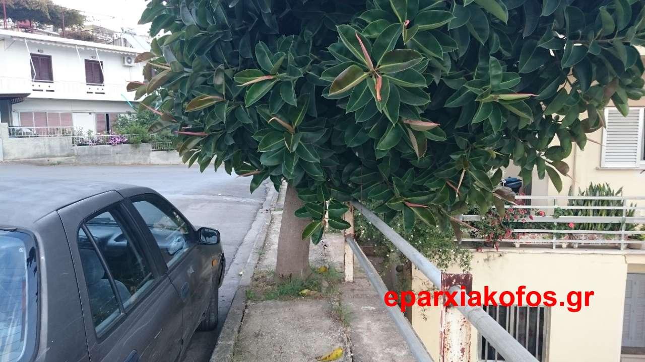 eparxiakofos_gr_0021