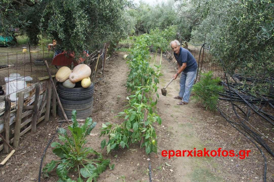 ΣΤΟ ΚΑΣΤΕΛΙ  – Λαϊκός χειροτέχνης και καλός κηπουρός παλιός επιπλοποιός