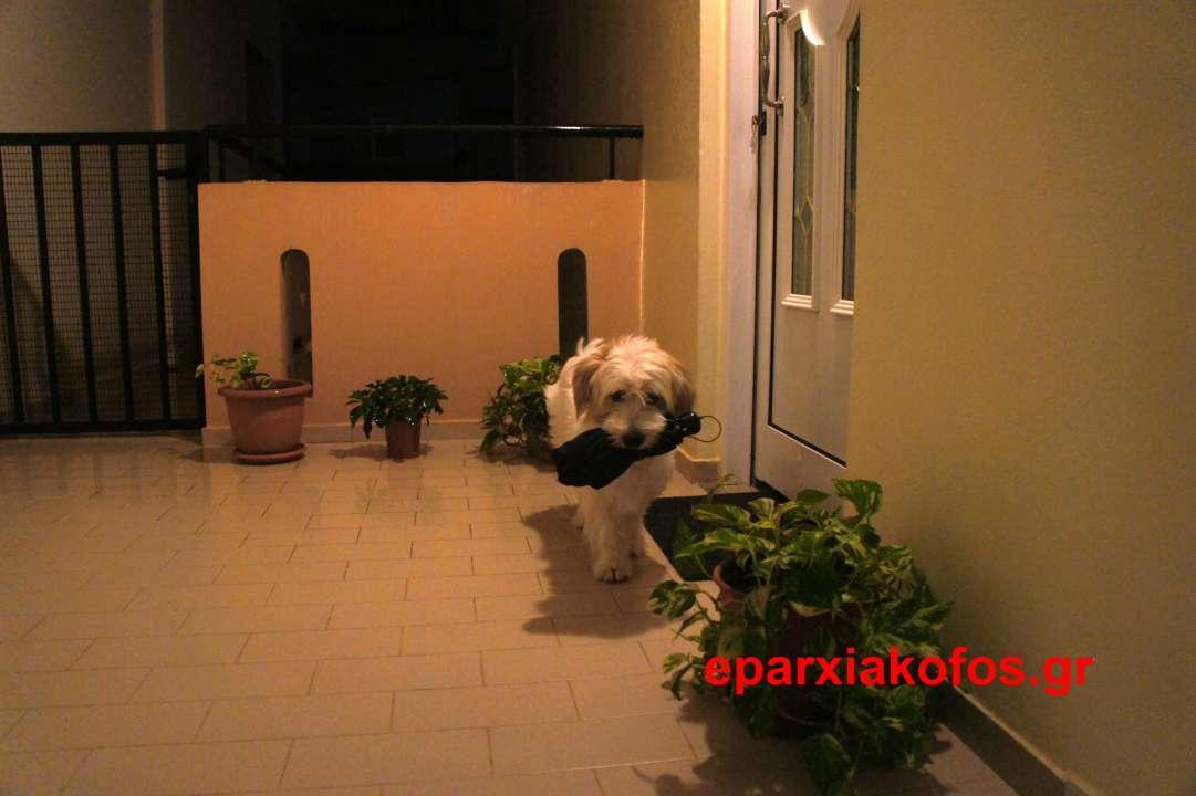 Κρατώντας ομπρέλα το σκυλάκι μας ετοιμάζεται για νυκτερινή βόλτα!