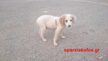 Η θλιμμένη ματιά σ' ένα μικρό αδέσποτο σκυλάκι…