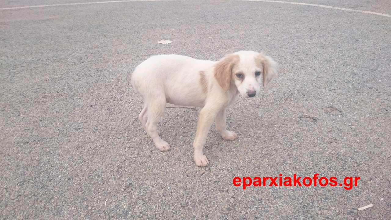 eparxiakofos_gr_0006