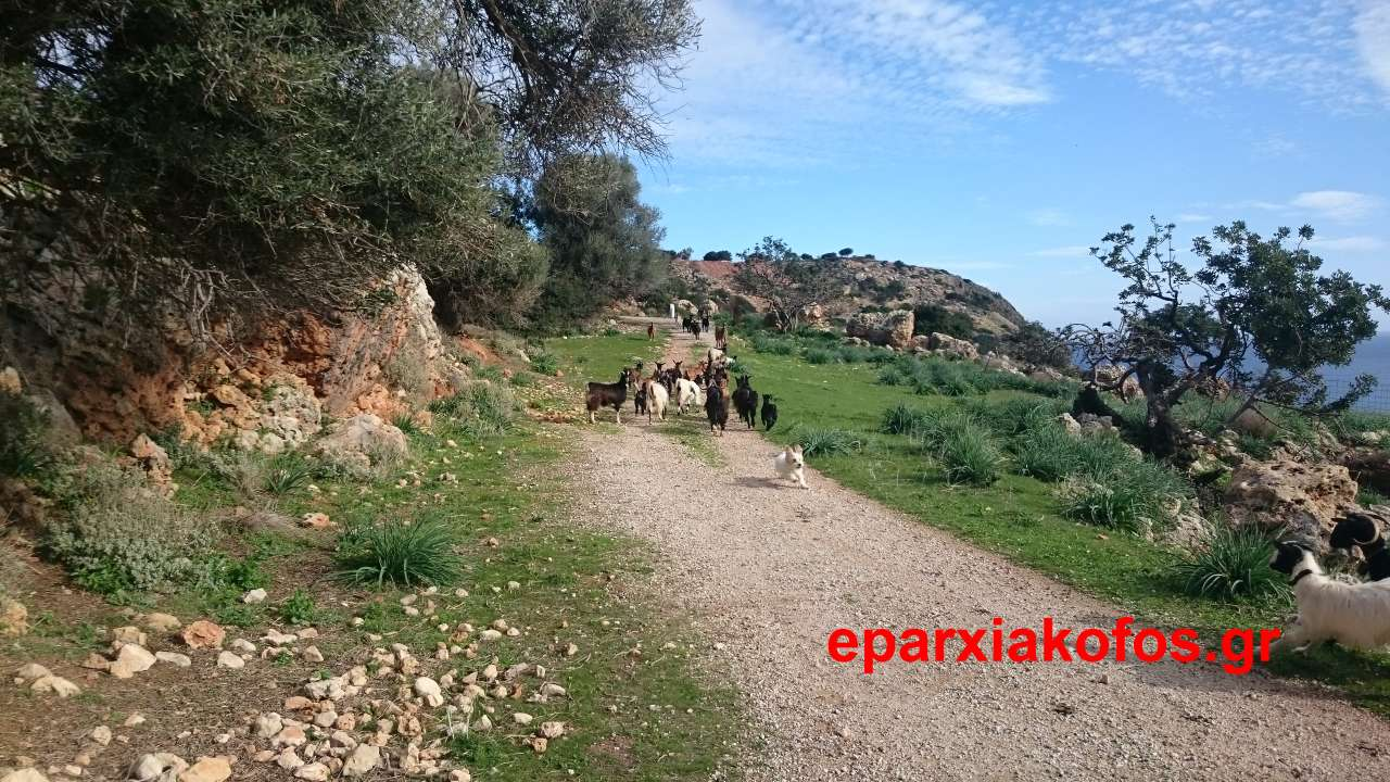 eparxiakofos_gr_0025