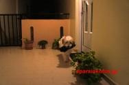 Αποχαιρετισμός στο αγαπημένο μας σκυλάκι τον Μπλεκ