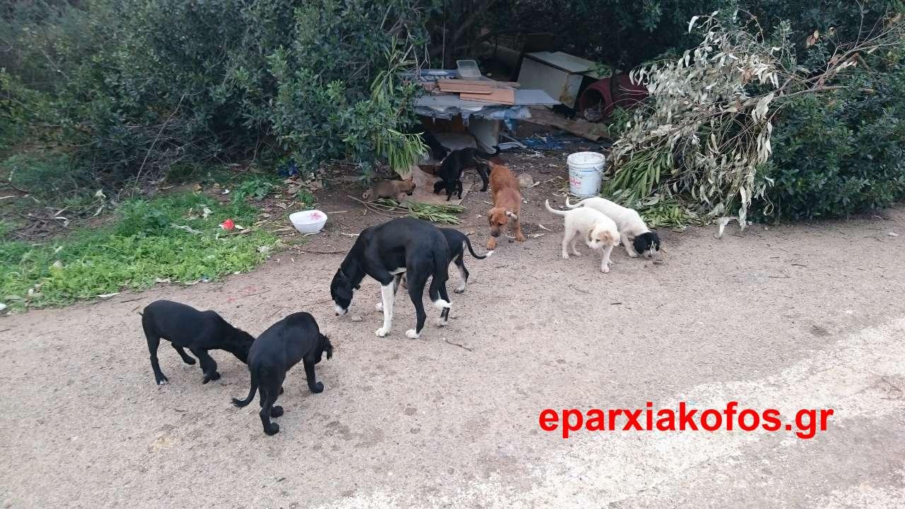 eparxiakofos_gr_0055