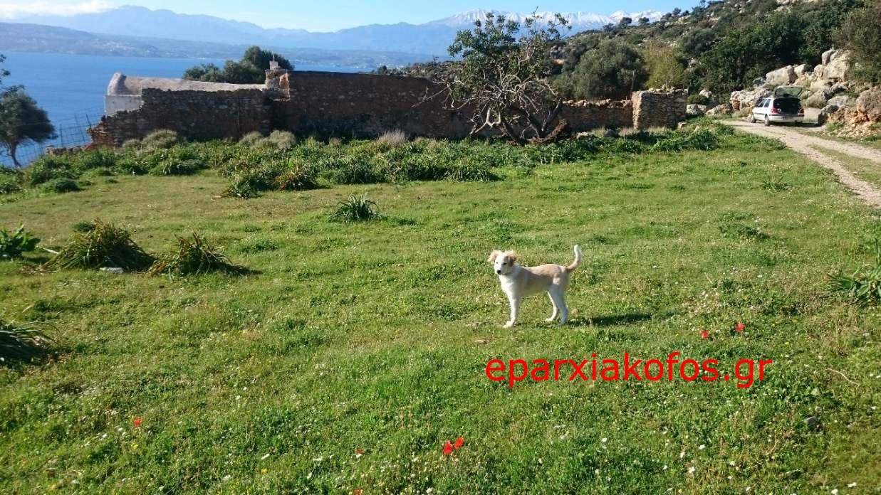eparxiakofos.gr_image0044