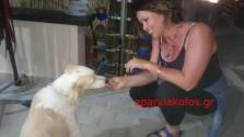 Μια εικόνα αγάπης με αλλοδαπή που αγαπά τα ζώα