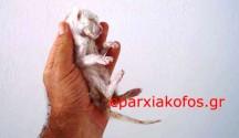 Έλεγχος γεννήσεων στα κατοικίδια ζώα με δωρεάν στειρώσεις