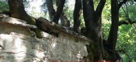 Μοναδικό στον κόσμο το φαινόμενο με τα δέντρα στο εξωκλήσι της Αγίας Θεοδώρας