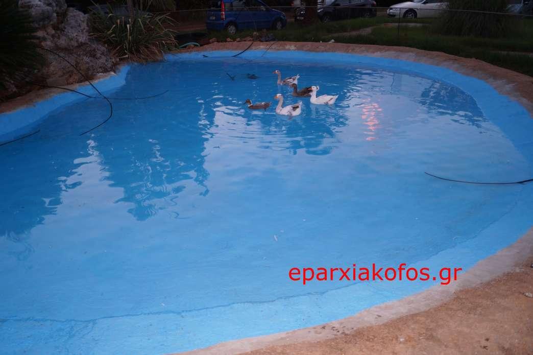 eparxiakofos0050