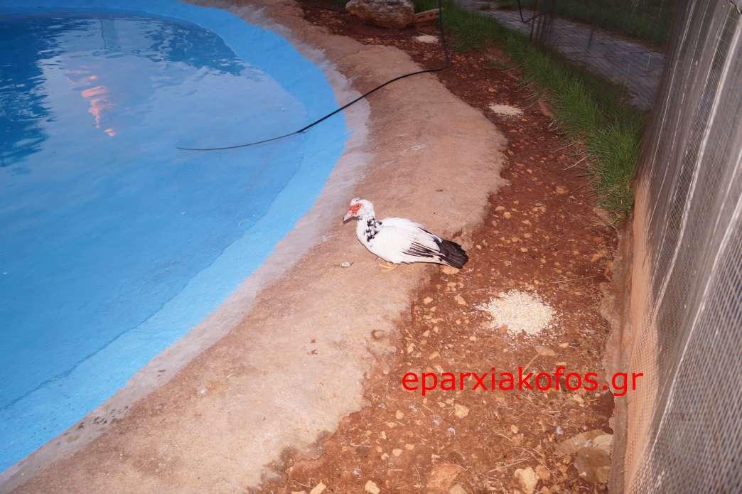 eparxiakofos0051