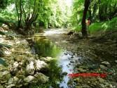 ΣΤΟ ΦΑΡΑΓΓΙ ΔΙΚΤΑΜΟΥ – Μια σκιερή άγρια διαδρομή στη φύση με αρώματα, χρώματα και… περιπέτεια!