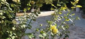 Στο κοιμητήριο του Αργουλιδέ…