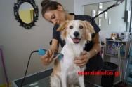 Το σκυλάκι μας ο Μπλεκ στο… κουρείο (Και βίντεο)