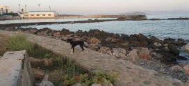ΧΑΝΙΑ – Να βοηθήσουμε τ' αδέσποτα ζωάκια
