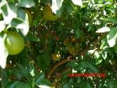 ΣΤΑ ΠΛΑΤΑΝΑΚΙΑ ΣΤΥΛΟΥ – Παράπονα καλλιεργητή για ακατάλληλο νερό άρδευσης (Και βίντεο)