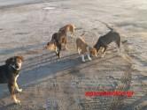 Παγκόσμια Ημέρα Ζώων η 4η Οκτωβρίου