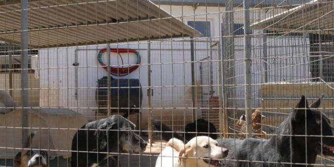 Κλείνουν το Κυνοκομείο Νεροκούρου