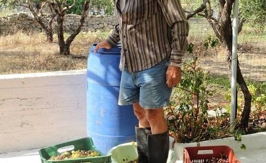 Ένα μικρό αυτοσχέδιο πατητήρι στην Κίσαμο