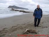 Άλλο ένα νεκρό αγρίμι εκβράστηκε στην παραλία Αγίας Μαρίνας