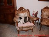 Η γατούλα και το σκυλάκι περιμένουν την… αλλαγή της χρονιάς!