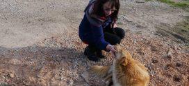 Σε περιοχές των Χανίων θανατώνουν σκυλιά με φόλες…