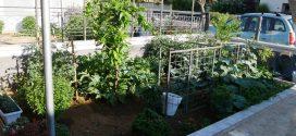 Ένας μερακλήδικος κήπος μέσα στα Χανιά