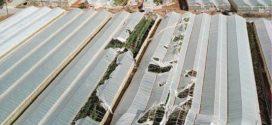 Μεγάλες ζημιές σε θερμοκήπια της Κουντούρας από ανεμοστρόβιλο