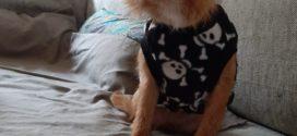 Μία ταλαιπωρημένη σκυλίτσα στα Χανιά…