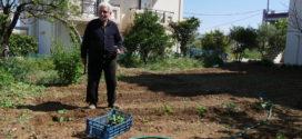 Νοικοκύρης αγρότης ετών 90 στην Κίσαμο