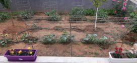 Μικρό κηπάκι στα Χανιά