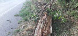 Από θαύμα δεν σημειώθηκε ατύχημα στην εθνική οδό στο Πλατάνι της Σούδας