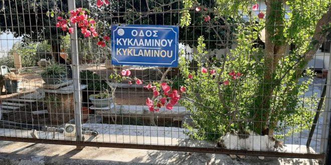 Ονοματοδοσίες οδών με λουλούδια και θάμνους στον Άγιο Ματθαίο