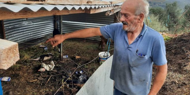 Έπνιξαν και δηλητηρίασαν οικόσιτα ζώα στο Πάνω Γεράνι
